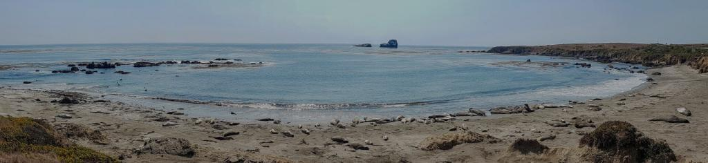 A bay full of elephant seals